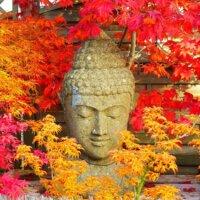 Buddha-Figuren aus Stein und japanischer Ahorn passen perfekt zusammen © Fotolia.com