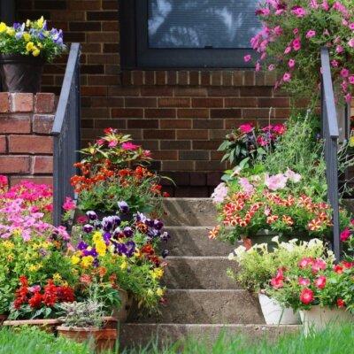 Treppe mit farbenfrohen Blumenkombinationen