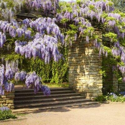 Naturstein Mauer mit wild wachsenden Pflanzen