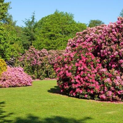 Perfekt getrimmter Rasen für den klassischen Garten