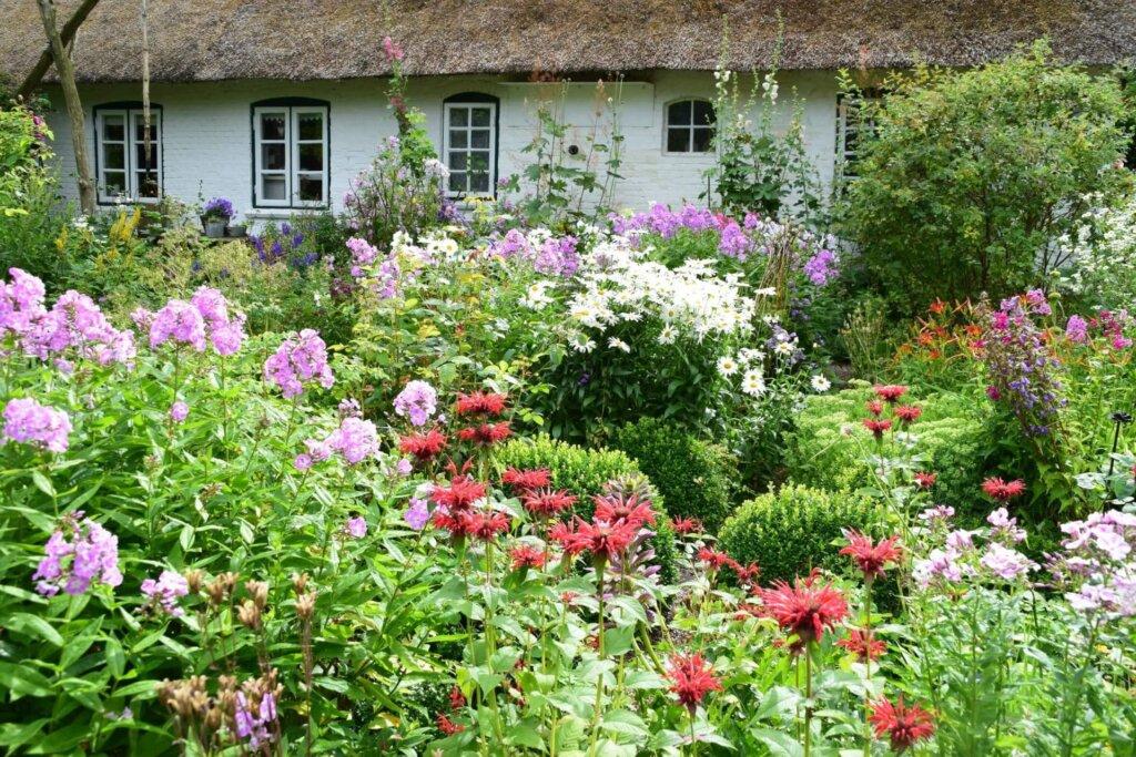 Wild wachsende Blumen vor einem Bauernhaus