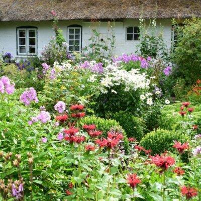 Wild wachsende Blumen vor einem Bauernhaus © hydebrink - Fotolia.com