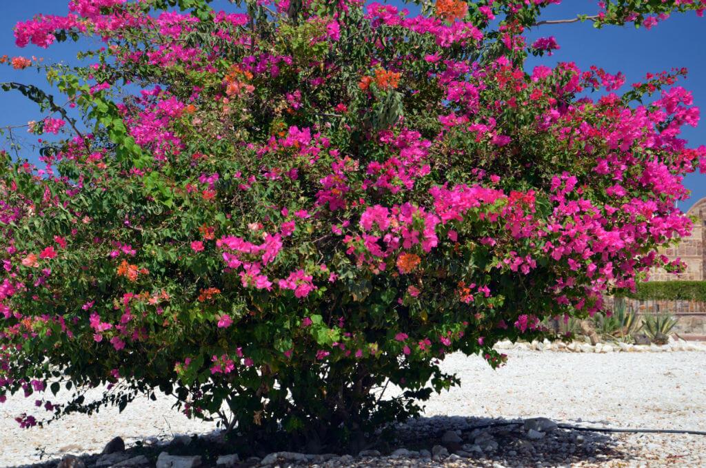 Farbenfrohe Pflanzen im orientalischen Steingarten