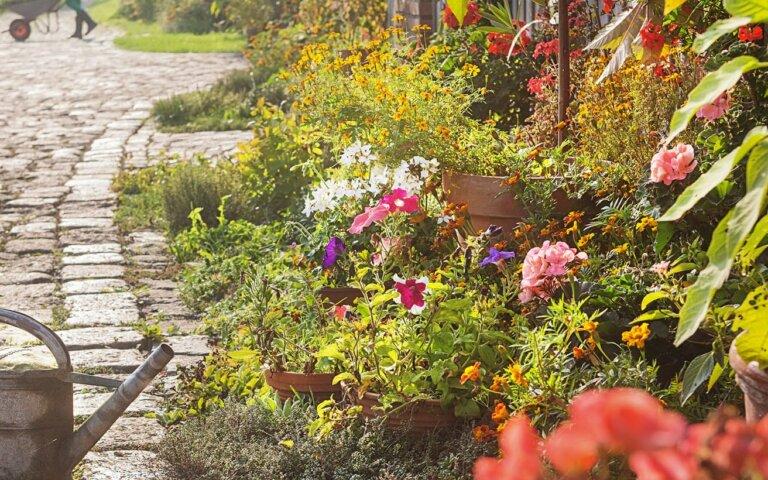 Bauerngarten & Cottage Garten anlegen/gestalten – Tipps zur Planung