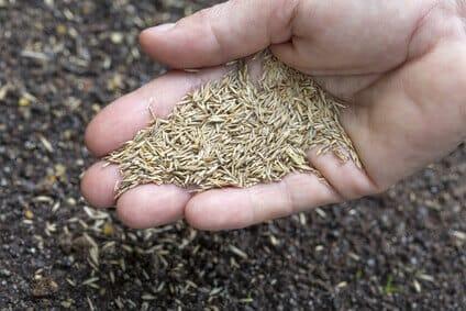 Die Aussaat des neuen Rasens