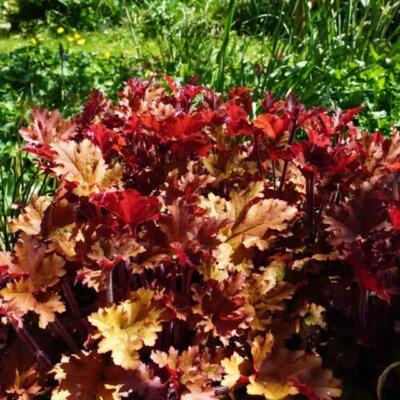 Stauden: Bodendecker als Gartenbepflanzung