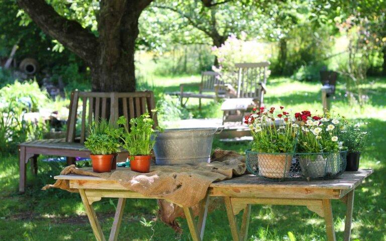 Ausgezeichnet: Gartentraum.de gewinnt den Shop Usability Award