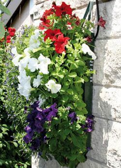 Platzsparende Pflanzsäcke für Balkon & Terrasse