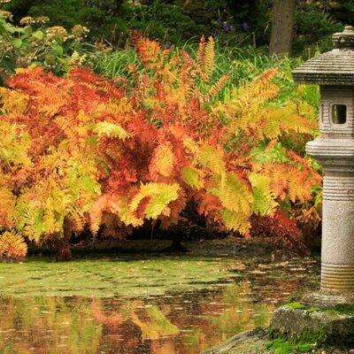 Farn im Herbst rot und gelb eingefärbt