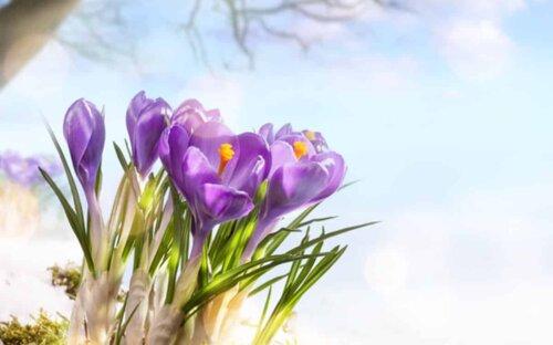 Garten im Frühling vorbereiten/gestalten – Dekoideen & Pflanztipps