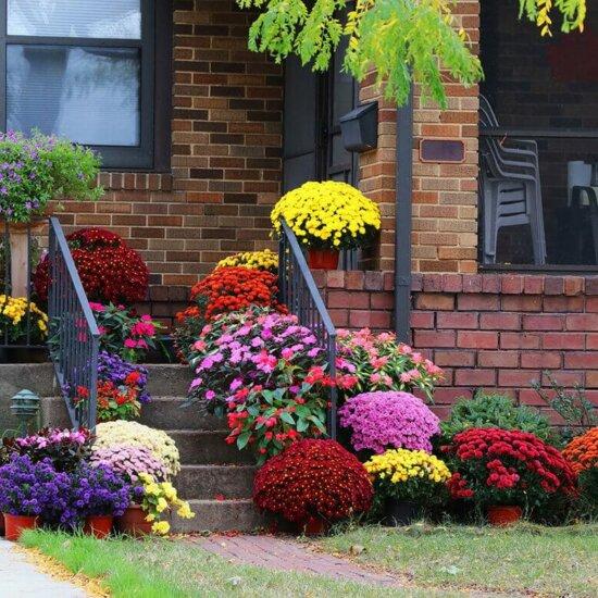 Viele blühende Blumen an einfachem Hauseingang © Fotolia.com - Maryna