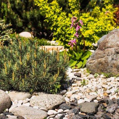 Steingarten mit Steinen, Blumen und Büschen © kikimor - Fotolia.com