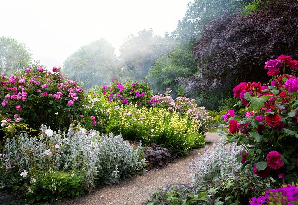 Rosen werten jeden Garten optisch auf und setzen optische Hightlights.