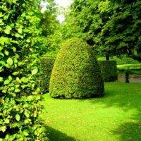 Hecken und Bäume in sattem Grün