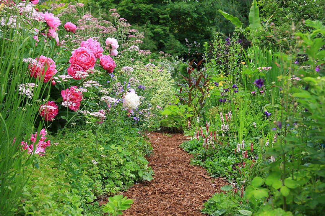 Englische Cottagegärten sind bringen eine vielfältige Blütenpracht hervor