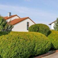 Immergrüne Pflanzen als Sichtschutz (2)