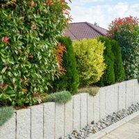 Immergrüne Pflanzen als Sichtschutz