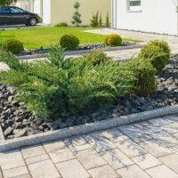 Immergrüne Pflanzen im Steingarten (4)