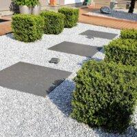 Immergrüne Pflanzen im Steingarten