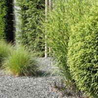 Immergrüne Pflanzen im modernen Vorgarten