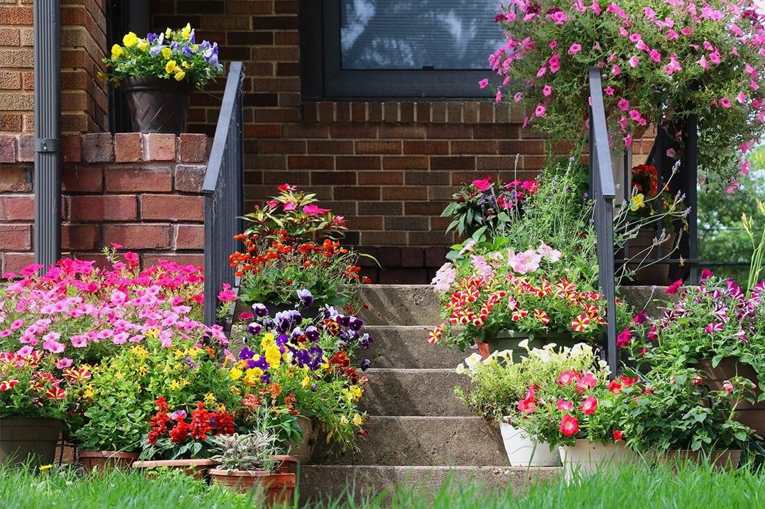 Blumen im Garten dienen als Dekoration und Farbtupfer