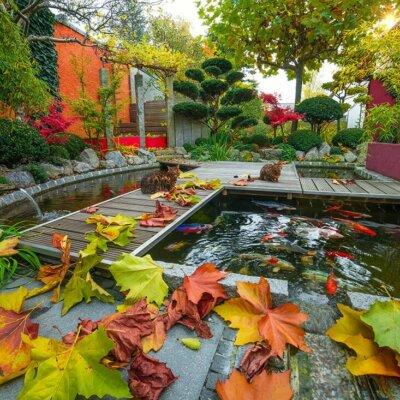 Gartenteich mit Fischen im Herbst © Fotolia.com - krappweis