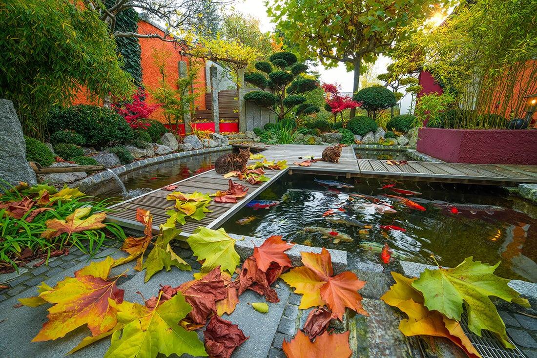 Gartenteich mit Fischen im Herbst