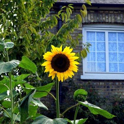 Einzelne große Blumen setzen farbige Highlights im Garten