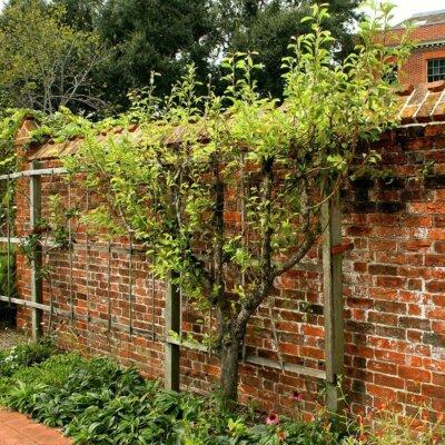 Mauern dienen als Sichtschutz und Designelement