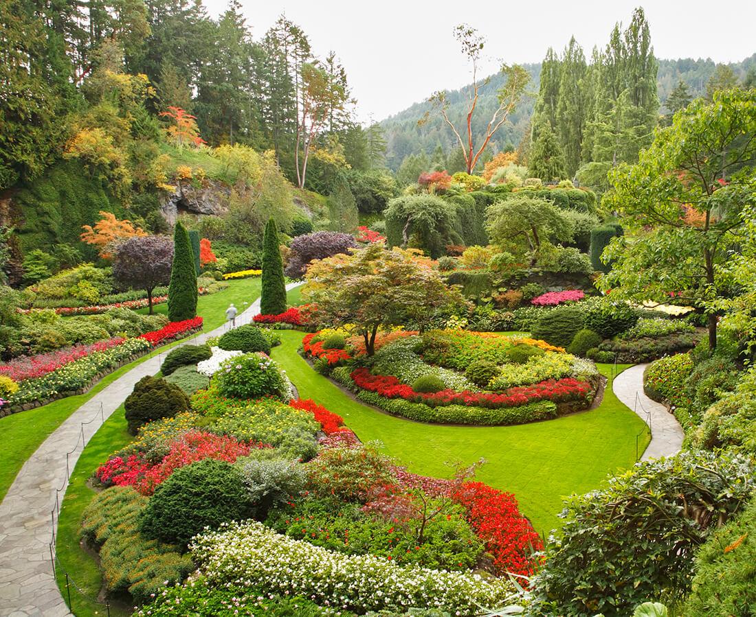 Auch im Winter können Sie mit den richtigen Pflanzen Farbe in Ihren Garten bringen.