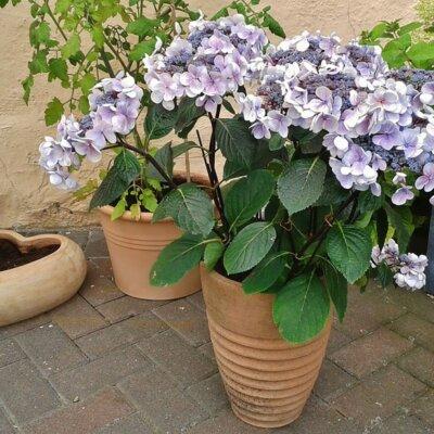 Pflanzgefäß für die Terrasse