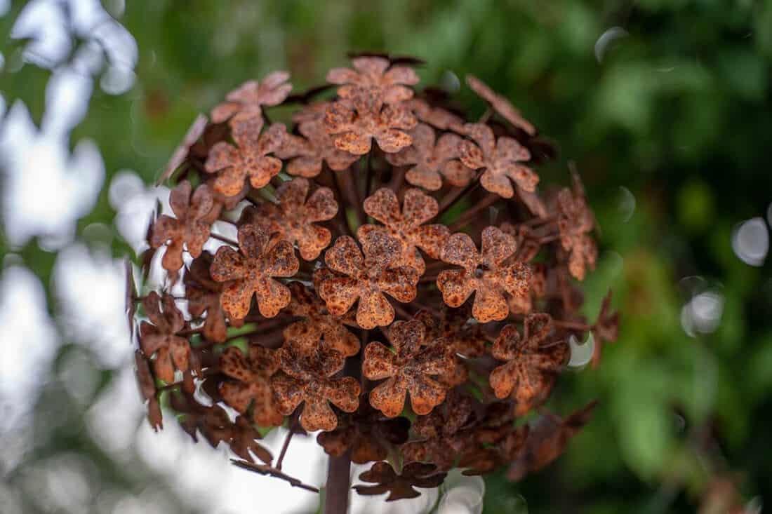Rost Blüte als Gartendeko