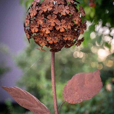 Rostblume im Garten