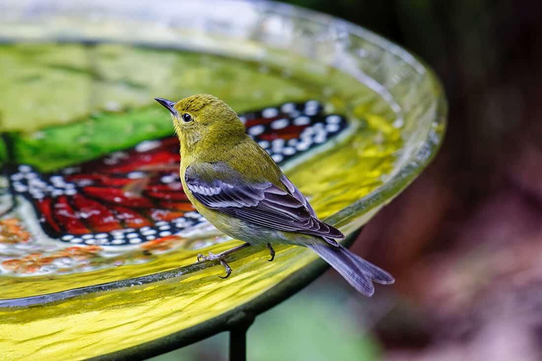 Bunte Vogeltränke aus Glas