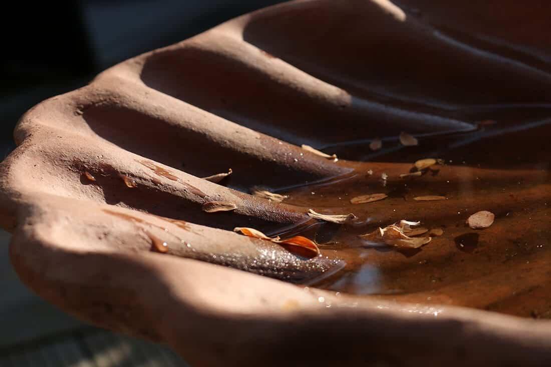 Vogeltränke Muschel
