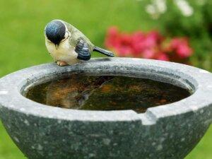 Vogeltraenke-vogelbad-meise