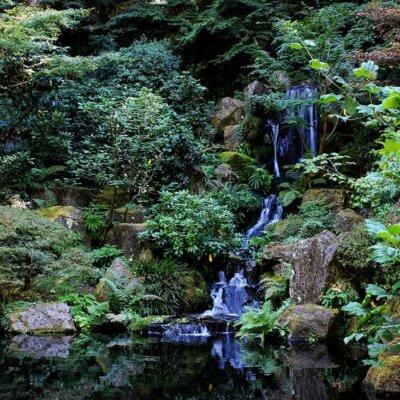 Wilder Wasserfall im Grünen