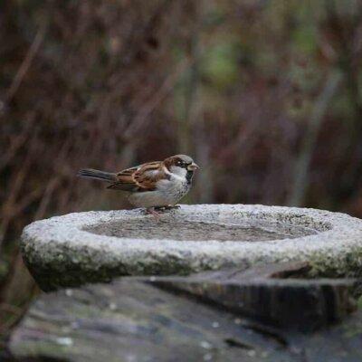 Vogeltränke aus Stein