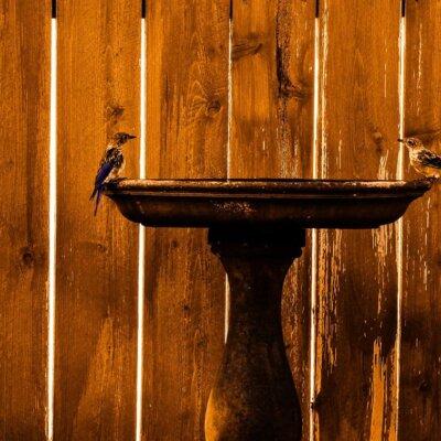 Vogeltränke in klassischem Design