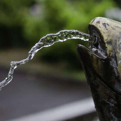 Fisch als Wasserspeier