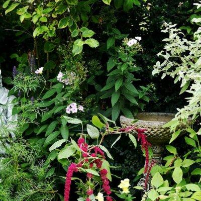 Vogeltränke versteckt in Blumenbeet