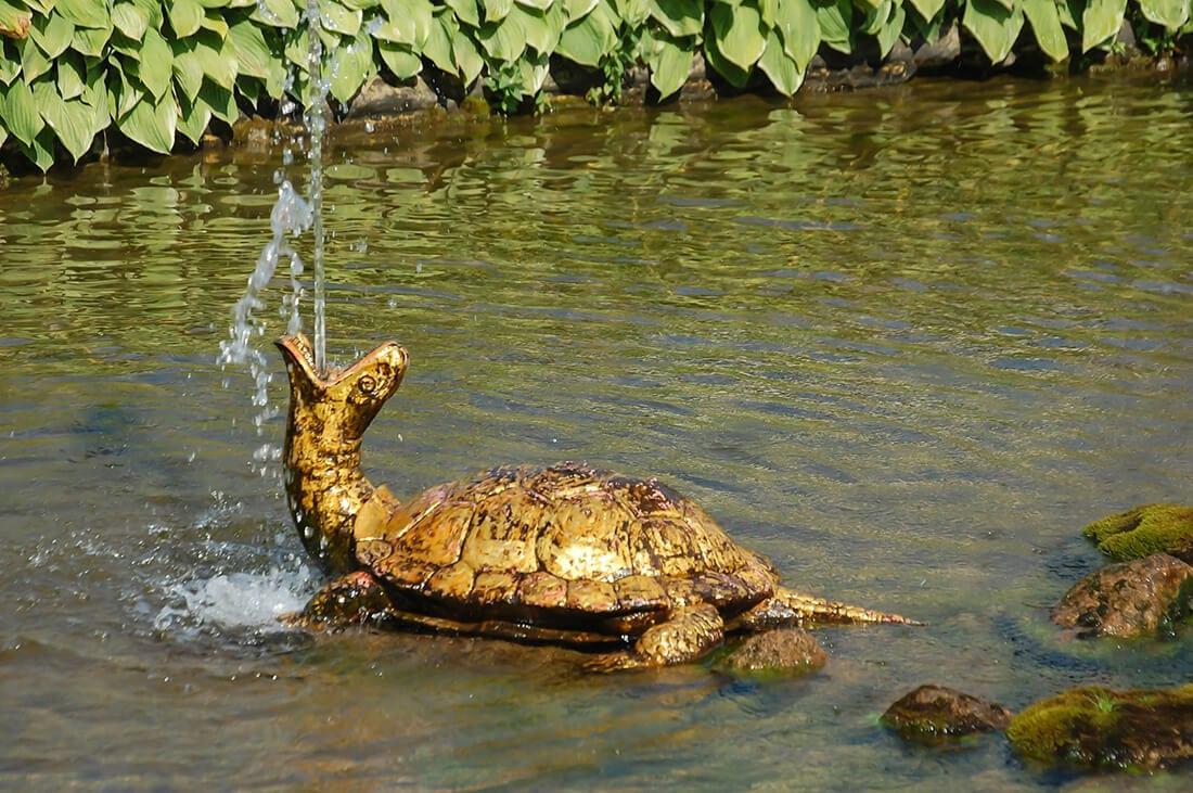 Schildkröte als Wasserspeier