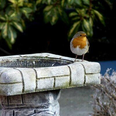 Vogelbad im Mauer-Look