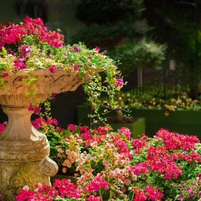 Pflanzgefäß mit vielen pinkfarbenen Blüten