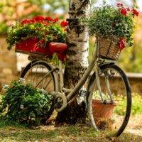 Altes Fahrrad dekorativ bepflanzt