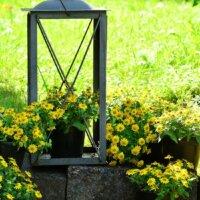 Laterne aus Metall dekorativ bepflanzt