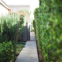 Pflanzen sind ein unaufdringlicher Sichtschutz