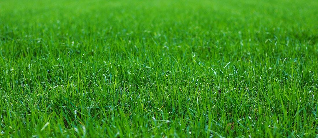 Gesundes Gras