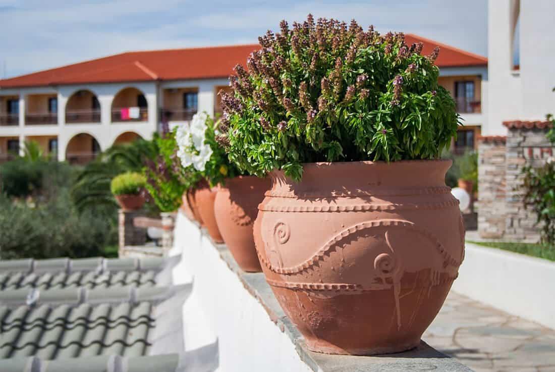 Winterharte mediterrane Pflanzen sind keine Seltenheit mehr.