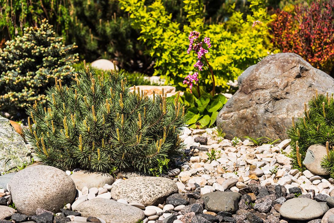 Ein Steingarten passt perfekt in einen mediterranen Garten.